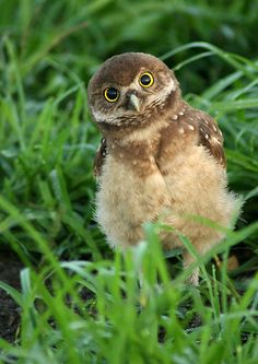 """""""Wanna come at me, bro?!"""" love owls."""