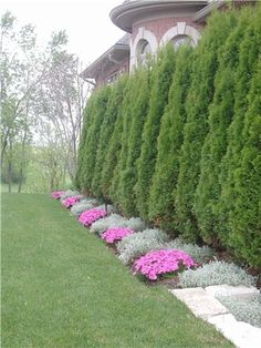 Awesome Fence With Evergreen Plants Landscaping Ideas 87 - Rockindeco - Garden Care, Garden Design and Gardening Supplies Arborvitae Landscaping, Landscaping Along Fence, Backyard Fences, Backyard Landscaping, Landscaping Ideas, Farm Fence, Dog Fence, Garden Fencing, Backyard Ideas