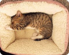 If it's as comfy as it looks, I think I would even sleep on it!