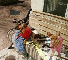 Azra, (left) Bella, & Koda, too sweet for words