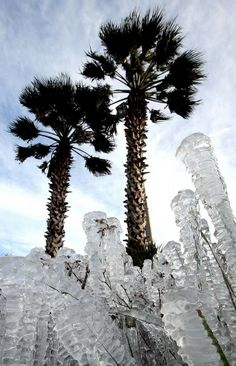 Ice-covered plants are seen in Panama City Beach, Fla. on Tuesday, Jan ...