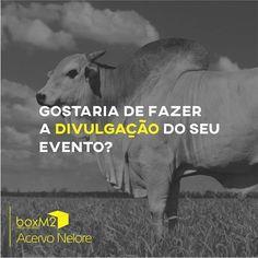 Amigos! Está promovendo um leilão ou gostaria de expor os seus animais?  Criamos a arte para as suas redes socias panfletos banners!  Divulgue o seu evento!  #boxM2#design#designer #designgrafico#graphicdesign #identidadevisual#brand #logo#divulgação#portfólio #brasil#oportunidades #investimento #promoção #acervonelore#campo #agronegócio#pecuária #consultoria#nelore#nelorepo #neloreelite#leilão#pagseguro #produtor#boatardee#goiás #goiania#ilhéus#empresa by boxm2