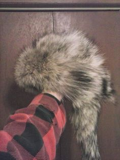 Foremost Coyote Hunting  How to make a fur hat from a coyote pelt   coyotehuntinghowtomake 2518cb717df