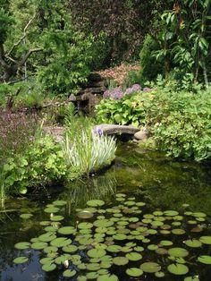Naturgarten: Idylle für Mensch und Tier