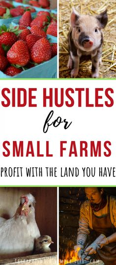 Super list of ways for making money on a small farmYou can find Hobby farms and more on our website.Super list of ways for making money on a small farm Hobbies That Make Money, Way To Make Money, Rc Hobbies, Farm Hacks, Farm Layout, Farm Plans, Homestead Farm, Homestead Survival, Homestead Layout