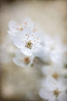 ✿ White flower Spring awakening  by Jacky Parker Floral Art, via Flickr