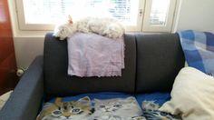 Ottoman, Throw Pillows, Bed, Furniture, Home Decor, Homemade Home Decor, Cushions, Stream Bed, Decorative Pillows