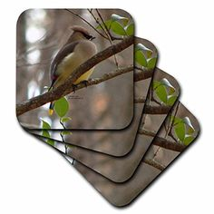Lee Hiller Photography Hot Springs National Park Wildlife  Cedar Waxwing on Branch  set of 8 Ceramic Tile Coasters cst_5009_4 ** You can get more details by clicking on the image. (This is an affiliate link) Cedar Waxwing, Bar Coasters, Hot Springs, National Parks, Wildlife, Ceramics, Photography, Link, Image