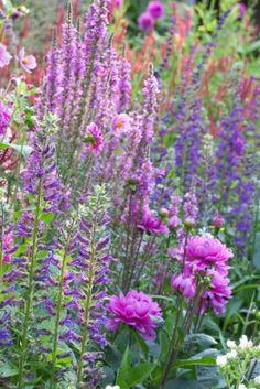Dahlia 'Karma Lagoon' Lythrum salicaria, Persicaria 'Firetail', Lobelia vedrariensis , mixed summer border, Mountain Fleece, Purple Loosestrife