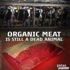 """""""Organic"""" doesn't mean anything to cows, it certainly doesn't make them happy cows #vegan #vegetarian"""