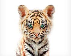 Tiger print, Baby animal prints, Nursery wall decor, Unique baby gift, The Crown Prints, Nursery prints, Baby room wall decor, Baby tiger