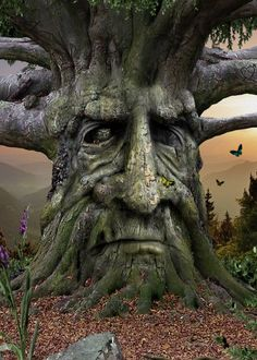 tree faces - Google Search