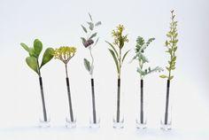 植物原子筆by bonboog日設    植物不會毛細現象把墨水吸上來嘛。﹃。
