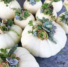 These pumpkins painted white with blue and green succulents are gorgeous! These shades compliment each other so perfectly!