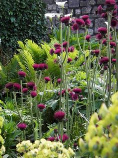My Favorite Plant Combinations 49