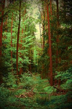 ✯ Perfect Forest
