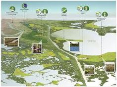 wetland aerial - Google Search