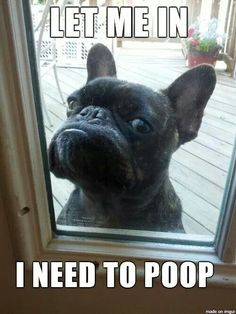 Let me in. I need to poop.