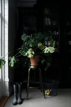 Style and Create — Monstera love | Photo by Malin Persson Follow...