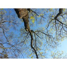 #tree#flower#sky#picoftheday#macka