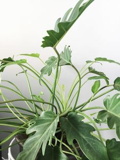 25 Houseplants That Will Inspire Your Trip To Home Depot's Gardening Section