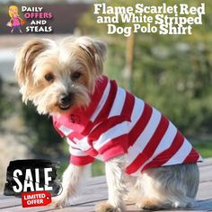 Made of 100% Cotton; this dog polo is perfect for any occasion where your dog wants to be dressy without sacrificing comfort.   https://www.dailyoffersandsteals.com/collections/dog-polos-shirts/products/flame-scarlet-red-and-white-striped-dog-polo-shirt