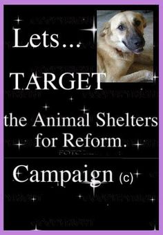 Target~ In Loving Memory of the Hero dog. COME ON TARGET SUPPORTERS PLEASE HELP!!! Target was brave..she was a fighter..so lets honor her!! PLEASE SIGN AND SHARE THE PETITION..VIP!! Lets...TARGET the Animal Shelters for Reform! Campaign. (c) This petition was created due to this recent tragedy, an avoidable, very sad and overwhelmingly cruel one to say the least! The KILLING of Target the War Hero dog at Pinal County Animal Shelter due to staff negligence and not adhering to correct…