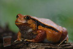 Toad, Pets, Animals, Frogs, Rainbow, Rain Bow, Animales, Rainbows, Animaux