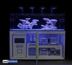 seadreams-ultimate-tank-build-3