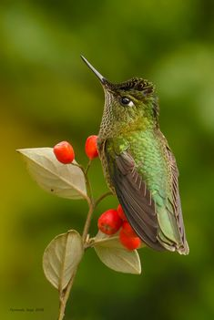 Contrastes. Cute Birds, Pretty Birds, Beautiful Birds, Animals Beautiful, Exotic Birds, Colorful Birds, Hummingbird Garden, Tiny Bird, Owl Bird