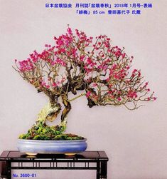 Bonsai Maple Tree, Bonsai Tree Types, Indoor Bonsai Tree, Bonsai Art, Ikebana, Bonsai Styles, Home Garden Design, Prunus, Beautiful Landscapes