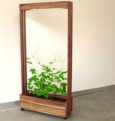 27 Ways To Maximize Space With Room Dividers, a planter with a vine