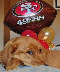 49ers Fan...a golden after my hubby's heart