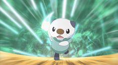 Image result for pokemon gif oshawott