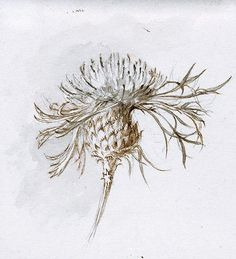 By Ruskin, John – White knapweed
