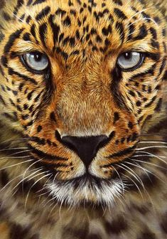leopard art work leopard oil painting How to Paint Animals - Wildlife Art and MORE! Wildlife Paintings, Wildlife Art, Animal Paintings, Animal Drawings, Beautiful Cats, Animals Beautiful, Gato Grande, Photo Animaliere, Tier Fotos