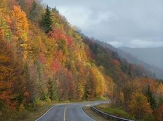 Scenic highway near Williams River in West Virginia by Tina Hopkins