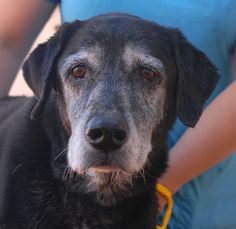 Emma has quiet, but powerful charm. She will bless you with immense gratitude for welcoming her into your loving family. Emma is a Labrador Retriever mix, 10 years of age and spayed, good with other dogs, and debuting for adoption today at Nevada SPCA (www.nevadaspca.org). She was at another shelter and needed our help. Please share Emma's picture to help find a hero.