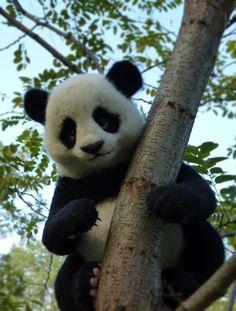 Needle felted panda MADE TO ORDER Handmade Felt by SvetlanaToys