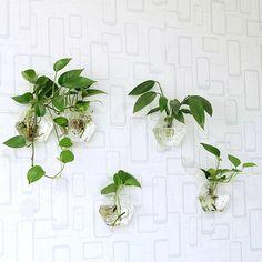 Set of 5 hexagon glass wall terrariums// wall hanging fish bowl // indoor wall planters// wall decor de NewDreamWorld en Etsy https://www.etsy.com/es/listing/251055767/set-of-5-hexagon-glass-wall-terrariums