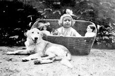 Girl in basket with cat next to dog - Lake Wales, Florida