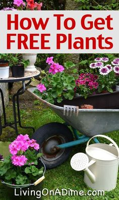 How To Get FREE Or Cheap Plants and Seeds Garden, ideas. pation, backyard, diy, vegetable, flower, herb, container, pallet, cottage, secret, outdoor, cool, for beginners, indoor, balcony, creative, country, countyard, veggie, cheap, design, lanscape, decking, home, decoration, beautifull, terrace, plants, house. #vegetablesindoor