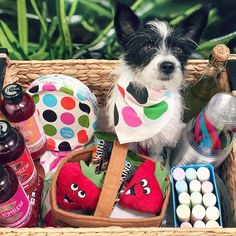 Gettin cheeky with our picnic-game.  #whatsinmybasket #boochdontkillmyvibe #boochpooch #picnic #kindawesome #darlingdays #summertimeallthetime #coppolawine