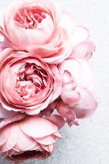 Beauty is like a flower
