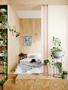Devil's Ivy all over this plywood bedroom makes the air cleaner for a better nights sleep.