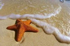 6 interesantes datos sobre las estrellas de mar que te sorprenderán