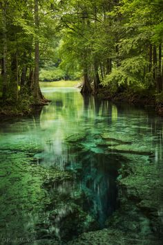 Little Devil Spring along the Santa Fe River in North Florida. Nature Pictures, Cool Pictures, Beautiful Pictures, Nature Aesthetic, Travel Aesthetic, Landscape Photography, Nature Photography, Image Nature, Nature Nature