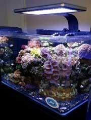The 45 Gallon Rimless Biotope Aquarium Brand New Rimless Design The New Rimless Unit Provides A Panoramic View Of Y Rimless Aquarium Aquarium Biotope Aquarium
