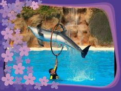 Dolphin. And flowers
