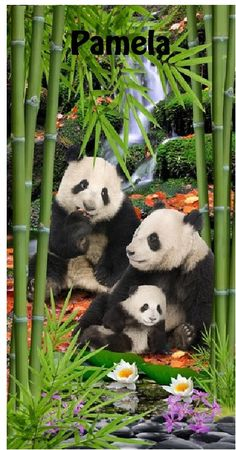 12 Bamboo Pandas Velour Beach Towel 30 X 60 Inch These towels are sturdy with vibrant colors will last for many trips to the pool or beach. Cute Baby Animals, Animals And Pets, Funny Animals, Beautiful Creatures, Animals Beautiful, Baby Panda Bears, Panda Wallpapers, Panda Art, Tier Fotos